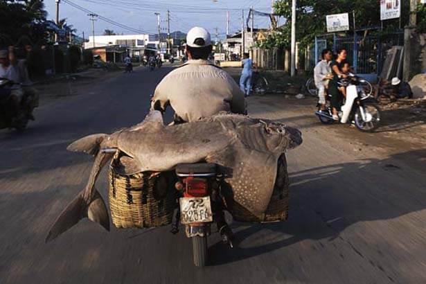 vietnam-009-01022003